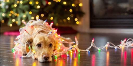 Recessão arrefece, mas varejo ainda terá pior Natal este ano