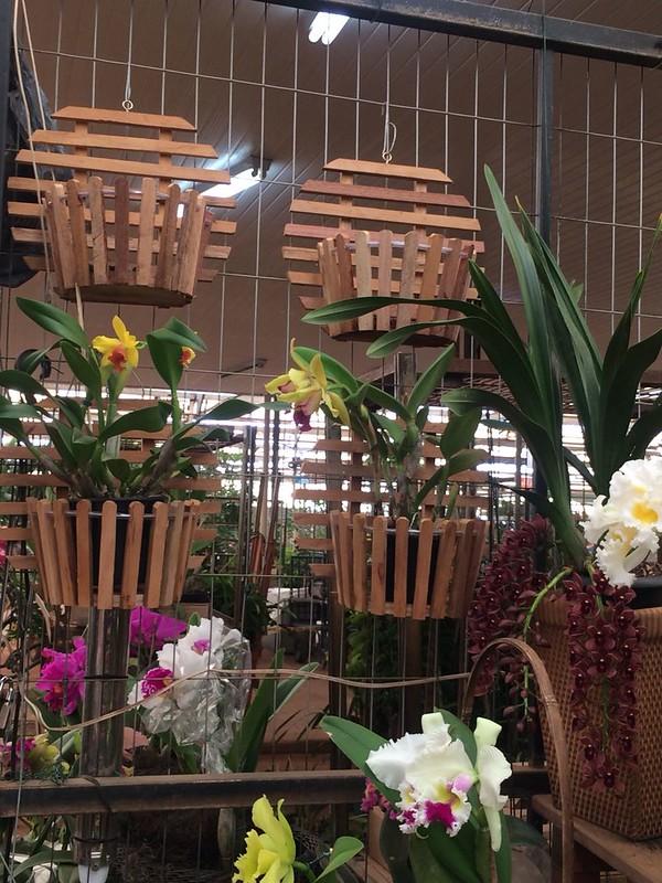 Floriculturas podem reabrir a partir desta quarta-feira